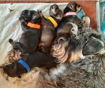 Hoera de puppy's zijn geboren