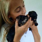 Kiwis Pups 2 weken